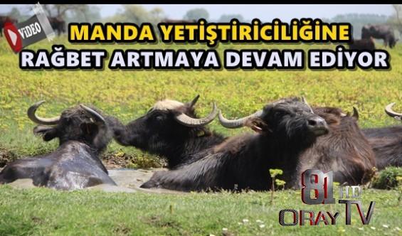 TÜRKİYE'DE EN ÇOK MANDA İSTANBUL'DA BULUNUYOR