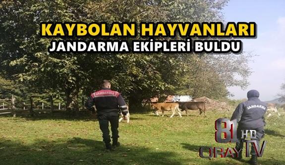 KAYBOLAN HAYVANLARI JANDARMA EKİPLERİ BULDU