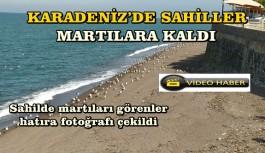 KARADENİZ'DE SAHİLLER MARTILARA KALDI