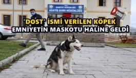 POLİSLER ÖLMEK ÜZEREYKEN BULDUKLARI KÖPEĞİ SAĞLIĞINA KAVUŞTURDU