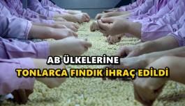 AB ÜLKELERİNE TONLARCA FINDIK İHRAÇ EDİLDİ