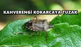 KAHVERENGİ KOKARCAYA TUZAK
