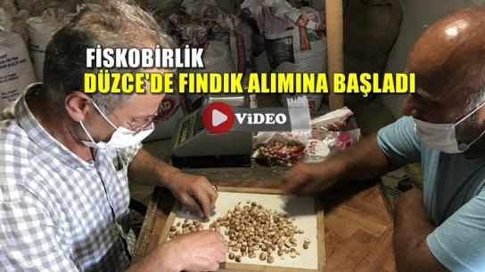 FİSKOBİRLİK DÜZCE'DE FINDIK ALIMINA BAŞLADI